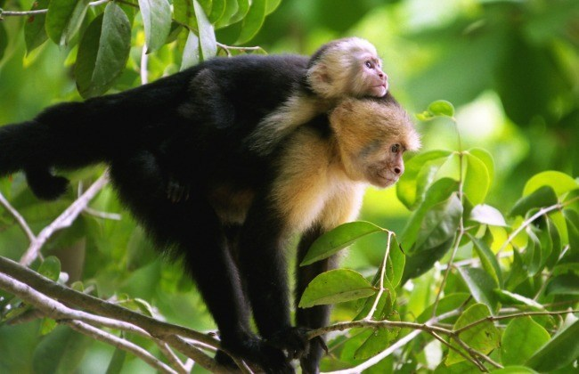 Deux singes partageant un beau moment de tendresse