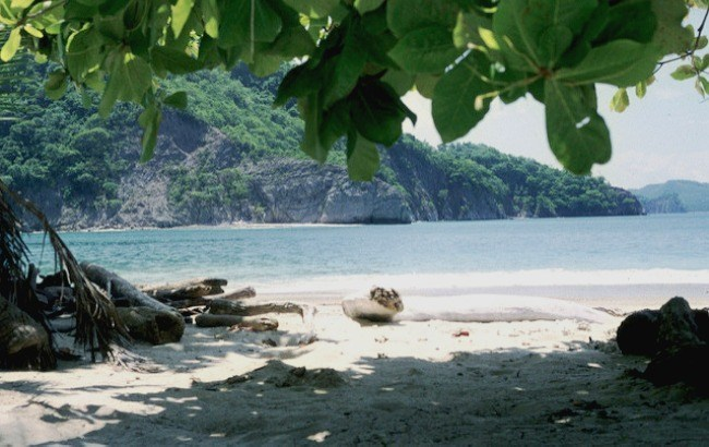 l'île Tortuga au Costa Rica, plus belles plages du Costa Rica